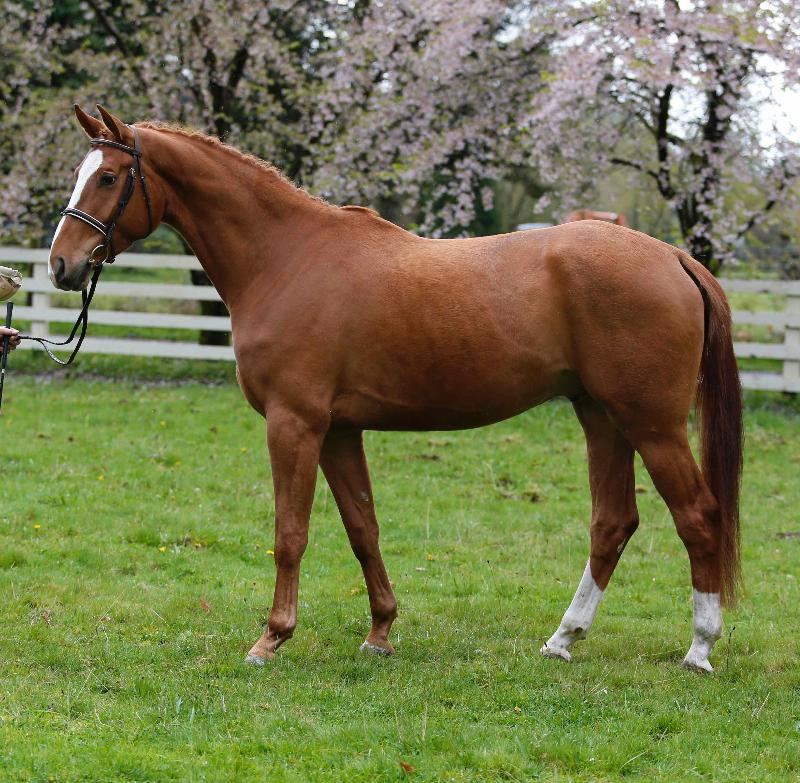 Sylvan Farm's Retirement Dispersal Auction Gives Buyers A Once-in-a-Lifetime Chance to Purchase from this Historic Program