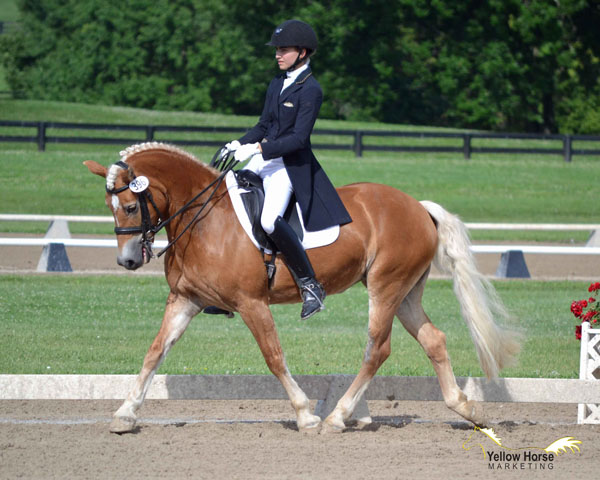 National Dressage Pony Cup Rewards Small Horses With Big