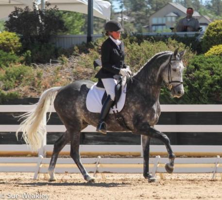 Petra Warlimont and Lorenzo in the Markel USEF/ Young Horse 5-Year-Old Qualifier (Photo: Sue Weakley)