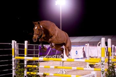A young horse in the jump chute.