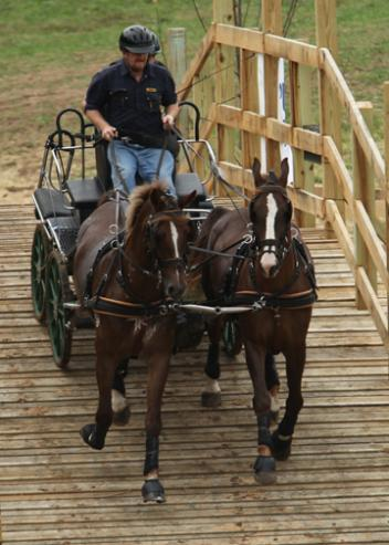 Australian Gavin Robson and his pair of Dutch Harness horses negotiate the newly constructed bridge for the Hermitage Classic 2011. (photo: JJ Hathaway)