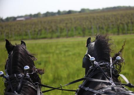 Driving along the vineyards of Michigan's wine region at Concord Ridge Equestrian Center.