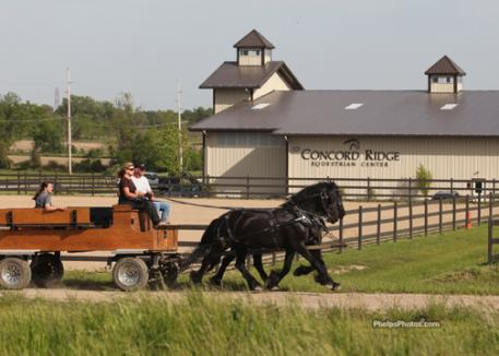 DressageDaily's Mary Phelps driving the Concord Ridge Majestic Friesians past the 2 outdoor dressage arenas being prepped for the upcoming USDF recognized show September 8-9.Photo: April Therrien for phelpsphotos.com
