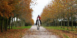 Amy Graham does not have to travel far to the Alltech/FEI World Equestrian Games in Normandy. Join us at the Haras Du Ry for a peaceful location as a base for the exciting WEG this year.