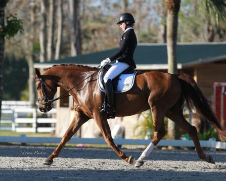 Silva Martin competing in the 5 yr old test Benefactor RRS (Bon Air x Heidekind by Rubinstein) A Hanoverian owned by Melinda Walton and Larry Smith receiving a score of 8.28 or 82.8%  Photo:www.sharonpacker.com