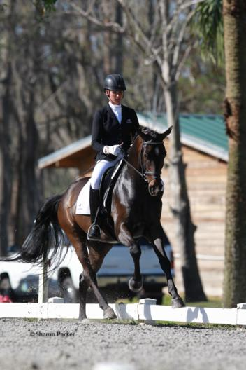 Silva Martin competing Fortissimo B (Fabuleux  x Roma I by Rubinstein) A Hanoverian owned by Camilla VanLiew receiving a score of 8.06 or 80.6% - A horse Silva has for sale  Photo:www.sharonpacker.com
