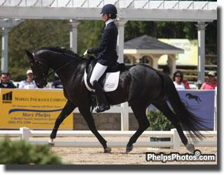 Caroline Roffman and Linda Crabtree's Eventing stallion San City (San Remo - Bounty by Bolero)