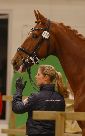 Two fold title defender Cornelissen and Jerich Parzival waiting for the vet check (Photo: Julia Ray)