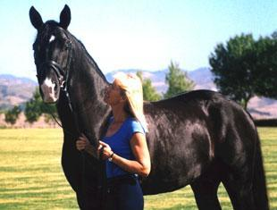 Charlotte Bredahl-Baker and Windfall CBher Hanoverian Stallion