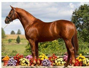UB40 - Iron Spring Farm's KWPN Stallion by Olivi