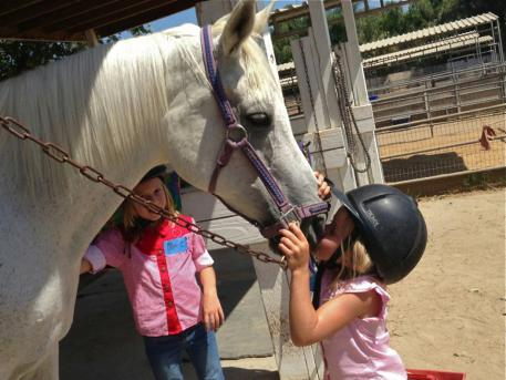 Ambition, the Arabian inspiring the love at San Diego Saddle Club LLC