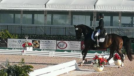 Sara Spofford riding Armante at the 2014 Global Dressage Festival