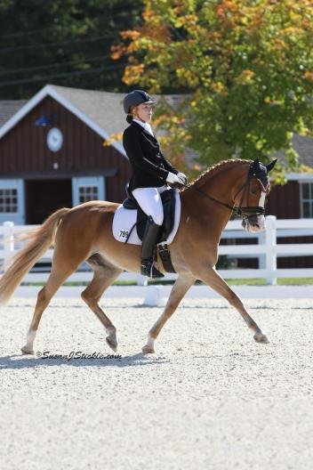 """Barbara """"Bebe"""" Davis and Poldy 10 (pictured) capped off their successful season by winning the FEI Pony Individual Test at Devon.  Davis also placed third with her pony Bohdjan. (Photo: SusanJStickle.com)"""