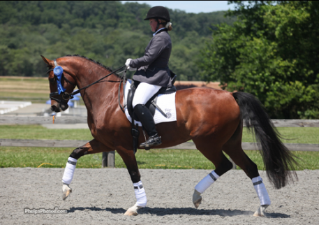 Markel/USEF Young Horse Dressage Selection Trial Six-year-old winner Biscaya by Johnson-SPS Hauptstutbuch Audrey by Argentinus (Photo: Mary Phelps - phelpsphotos.com)