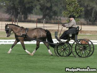 Sybil Humphries and Bouncer bounced to high score in Intermediate Dressage divison at the Little Everglades Ranch International CDE