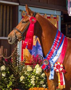 Floraya ISF, by Florianus II, earned Reserve Grand Champion, Young Horse Champion and Filly Champion at Dressage at Devon. Her results contributed to Iron Spring Farm's #1 Breeder ranking by the USEF in Dressage Breeding. (Photo: Stacy Lynne Photography)
