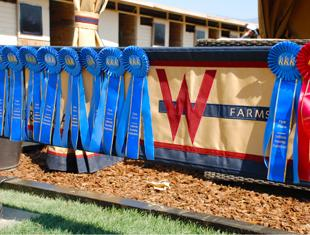 W Farms ribbons