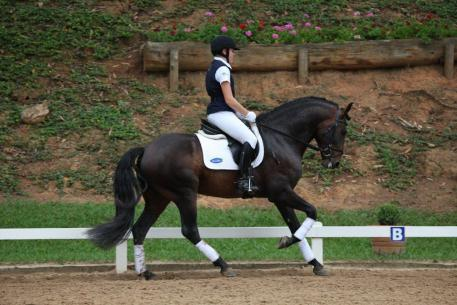 Caliente (formerly Caligula) Interagro was selected to participate in the New England Dressage Association(NEDA) 2012 Fall Weekend Symposium, held on Oct 27th -28th at Pineland Farms in New Gloucester, Maine. (Photo: Tupa)