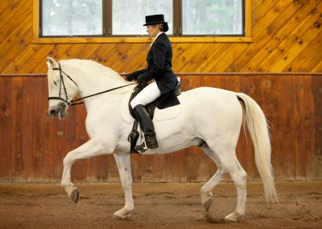 Cari Swanson and Listo in the real world of Dressage