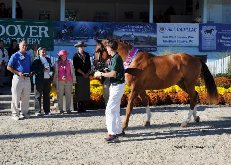 Hilltop Farm's Cha Ching (Contucci x Comtesse) won the Colt/Geldings Championship