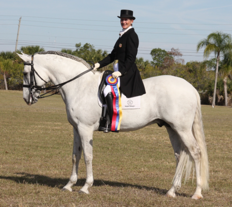 Cherri Reiber and Sargon Interagro, owned by Louise Turkula, won the Championship Year End Award in the Prix St. Georges Open division and the Reserve Championship in the I-I Open division in the Adequan®/USDF All Breed Award For Lusitanos and Andalusians.