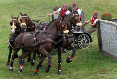 Chester Weber and his team on their way to a tenth National Four-in-Hand Championship. (Photo courtesy of PicsofYou.com)
