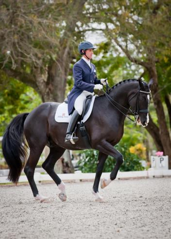Christopher Hickey piloted Pacino, owned by Oak Meadows in the Grand Prix to score 67.234%. Pacino (Parabol x Cor Noir) competing in his first recognized show at Grand Prix. Photo: Joanna Jodko