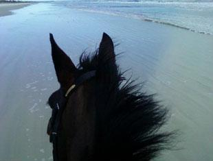 Jennifer Conour took this image of her FEI Dressage horse Rumor from his back while riding on Crecent Beach, Florida near Double L Farm