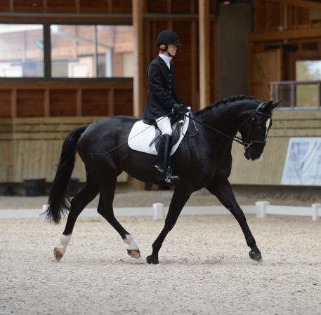 Former eventer, Margaret 'Gigi' McIntosh, returns to Europe with her revcently aquired Rio Rio.(c)pixels events