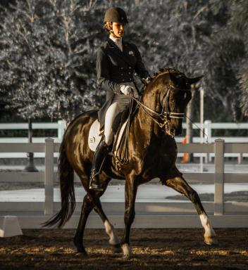 Dressage rider and trainer Caroline Roffman of Lionshare Dressage put in an impressive ride on Sagacious HF in the Young Rider Grand Prix at the Gold Coast Dressage Association(GCDA) Fall Fling. (Photo courtesy of Al Guden)