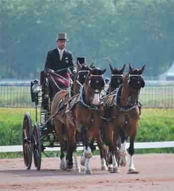 Team Weber in the dressage phase at Caen. (Photo courtesy of Madeleine Augustsson)