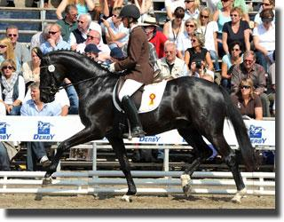 Southern German Champion Da Capo (Dancier x Lanciano) catalog number 15