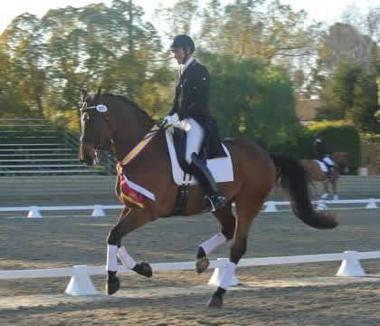 David Blake (Encinitas, CA) on Melanie Pai's Ikaros, a 2000 Danish Warmblood gelding:  Photo: Melanie Pai