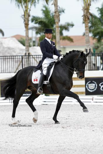 New Canadian citizen David Marcus riding Chrevi's Capital excelled in dressage competition during the 2012 winter season in Wellington, Florida.