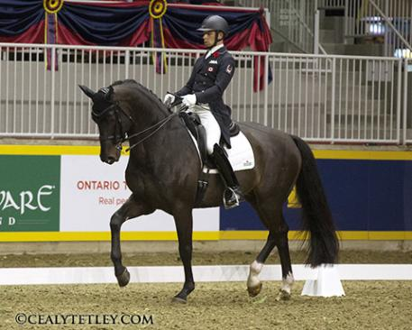 David Marcus and his Olympic mount Chrevi's Capital won the ,000 Royal Invitational Dressage Cup at the Royal Agricultural Winter Fair in Toronto, ON. Photo Credit – Cealy Tetley, www.tetleyphoto.com