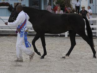 Reserve Young Horse Champion Dazzle. Photo Hoof Print Images