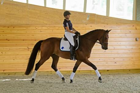 Eclipse ISF (Sir Sinclair) earned 1st premium and the Star predicate. He was also the High Score Young Dressage Horse in the studbook inspection. (Photo: Stacy Lynne Photography)