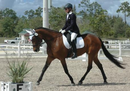 Emma's Pearl, ridden by Jules Anderson, is the first Standardbred ever entered at the March Gold Coast Dressage Show. She scored a 75+ at Intro B, the high score of the show.