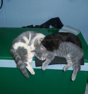 Liz Felgendreher's Barn cats know the warm place to sleep on Back on Track leg wraps.
