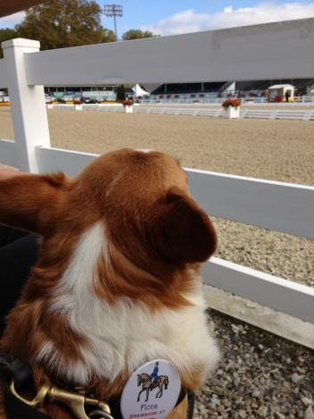 Fiona watching the action at Dressage at Devon