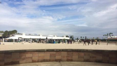Sunny skies for day two of the Florida Gold Coast Quarter Horse Circuit
