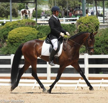 Frederick Magazzeni and Razz Ma Tazz in the Rising Star Training Level Test 1