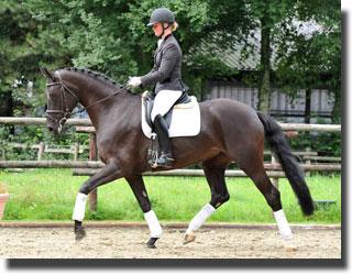 French Queen (French Kiss) was the high selling dressage horse of the auction.