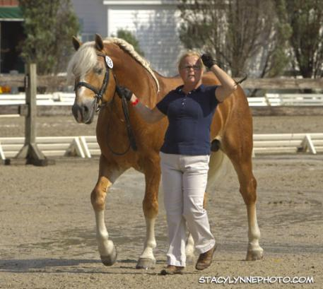 Breed Classes for Haflinger
