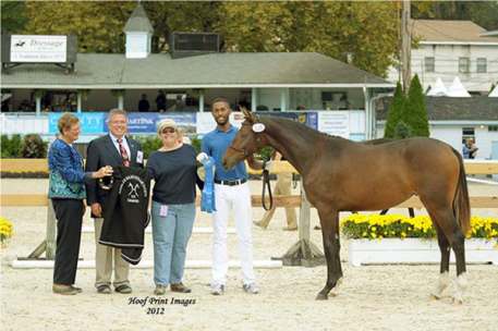 Winner of Hanovarian class Age 2 and under Francheska AH (Photo: Hoof Print Images)