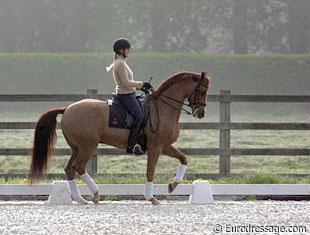 Ashley Holzer and Pop Art training at Jewel Court Stud in Belgium. Credit: Astrid Appels - Eurodressage.com