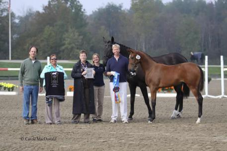 Bellasaria HM, by Bellissimo M and out of EM Day Dream - championship title for foals in the New England Breeder's Series Championship.  Photo: Carole MacDonald