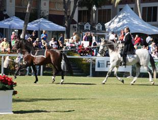 Cherri Reiber, and the Lusitanos Zerbino Interagro and Visitor Interagro, presented a tandem driving exhibition at the Fidelity Investments Holiday HorseFest at the Meyer Amphitheatre in West Palm Beach's downtown waterfront. The two Lusitanos, who come from Interagro Farms in Brazil, demonstrated the piaffe, passage, and Spanish walk for the crowds.