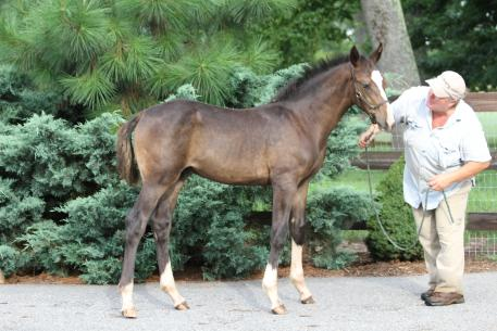 David Bowie MF sired by Marydell Farm's Don Principe