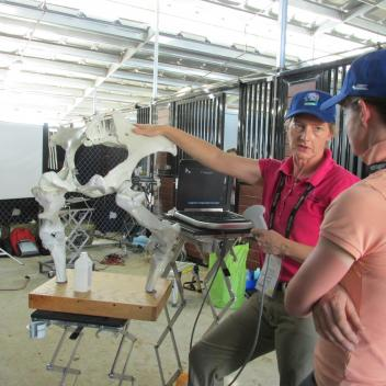 Dr. Suzan Oakley of Oakley Equine clarifies SI positioning technique on the model.